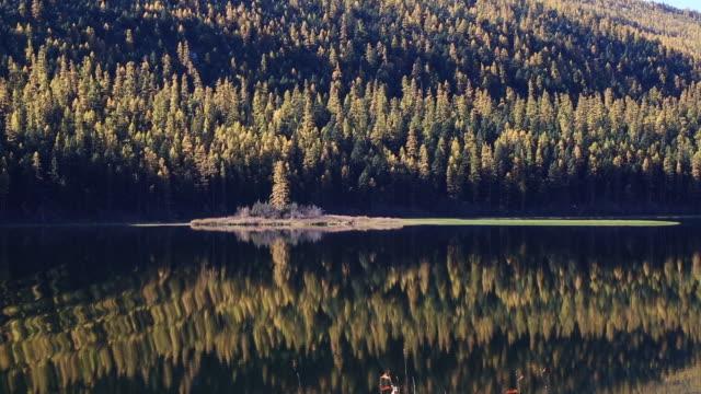 vídeos y material grabado en eventos de stock de wide pan shot of golden yellow larch trees reflecting in calm mountain lake at sunrise. - pinaceae