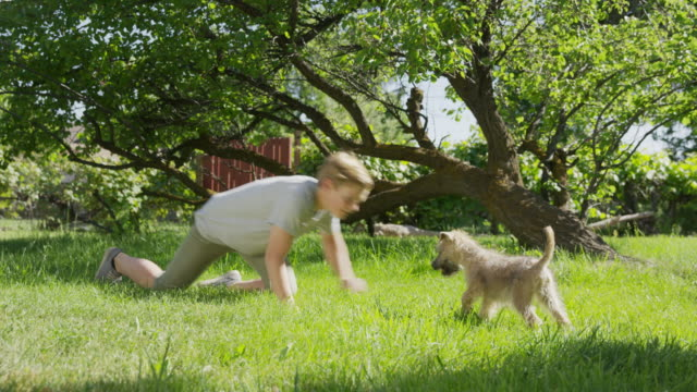 wide panning shot of boy playing with dog in field / springville, utah, united states - springville utah stock videos & royalty-free footage