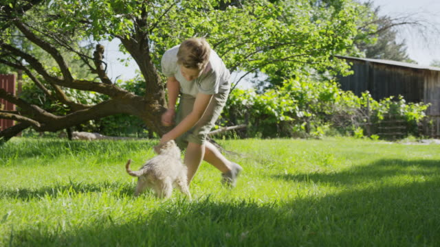 wide panning shot of boy playing with dog in field / springville, utah, united states - springville utah stock-videos und b-roll-filmmaterial