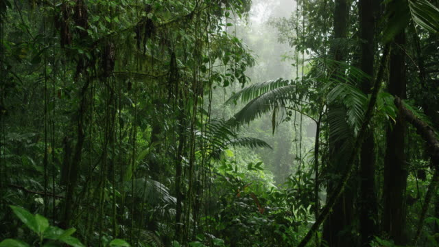 wide panning shot of dense rain forest / arenal, costa rica - costa rica video stock e b–roll