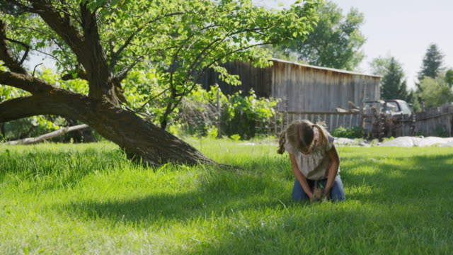 wide panning shot of kneeling girl petting rabbit in field / springville, utah, united states - springville utah stock videos & royalty-free footage