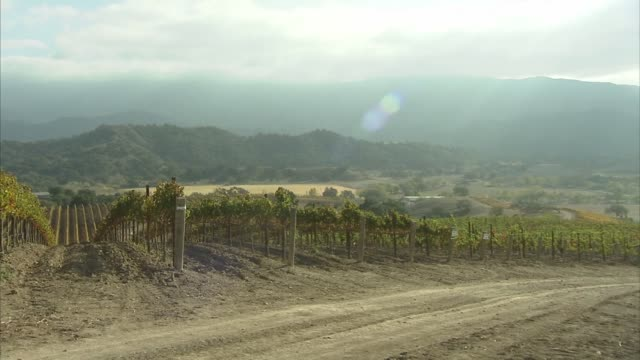 wide panning shot of the vineyards on the neverland ranch property on a sunny day, a slow zoom out shot of the vineyards on the neverland ranch... - ネバーランドバレーランチ点の映像素材/bロール