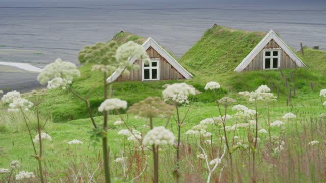 wide panning shot of turf houses behind flowers / austur-skaftafellssysla, iceland - northern europe stock videos & royalty-free footage