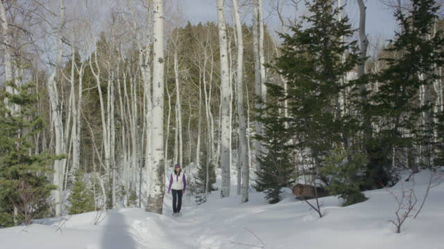 vídeos y material grabado en eventos de stock de wide panning shot of woman snowshoeing in forest / american fork canyon, utah, united states - american fork canyon