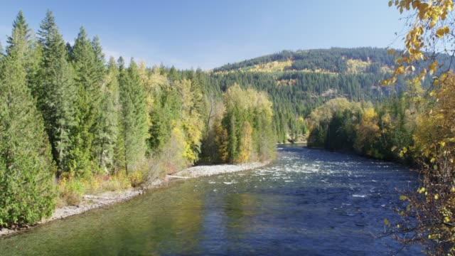 wide, river flows through british columbia landscape - wilderness stock videos & royalty-free footage