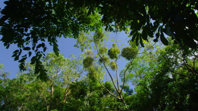 A wide scene of jungle