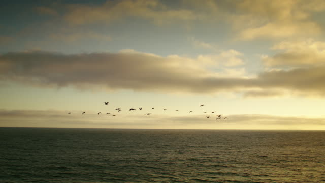 vídeos de stock e filmes b-roll de a wide scenic panning shot of a flock of pelicans flying over the ocean during a beautiful golden sunset. - pelicano