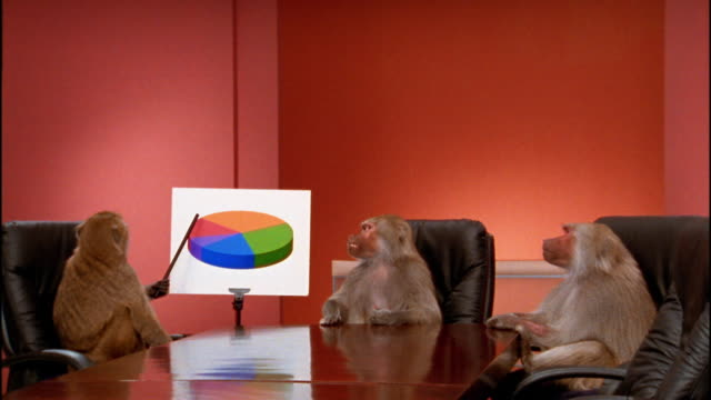 vídeos de stock, filmes e b-roll de wide shot 3 baboons sitting around conference table / zoom in to medium shot one monkey pointing to pie chart - macaco