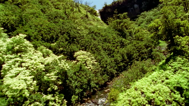 wide shot aerial waterfalls over steep cliffs and stream running through dense green forest / hawaii - waterfall stock-videos und b-roll-filmmaterial