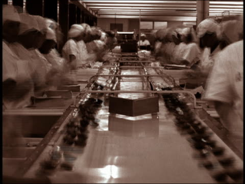 vídeos de stock, filmes e b-roll de wide shot assembly line workers working with food on conveyor belt - indústria de comida e bebida