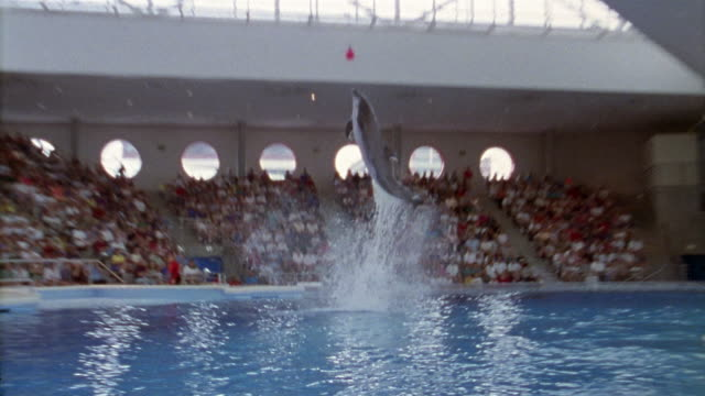 Wide shot audience at National Aquarium / zoom out dolphin leaping out of pool to touch ball and splashing down/ DC