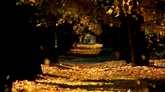 stockvideo's en b-roll-footage met wide shot autumn leaves falling / covering suburban sidewalk and lawns - gazon