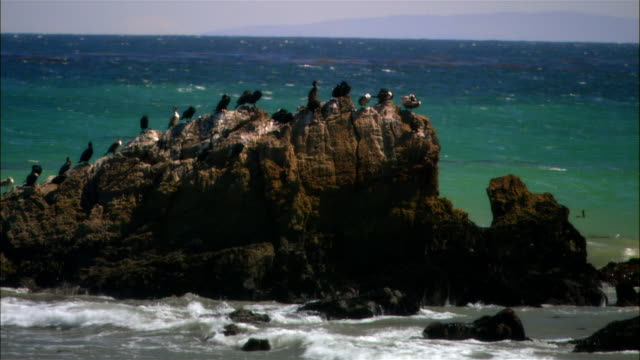 wide shot birds sitting on rock and pelicans landing on water as tide comes in on beach/ malibu, california - malibu beach stock videos & royalty-free footage