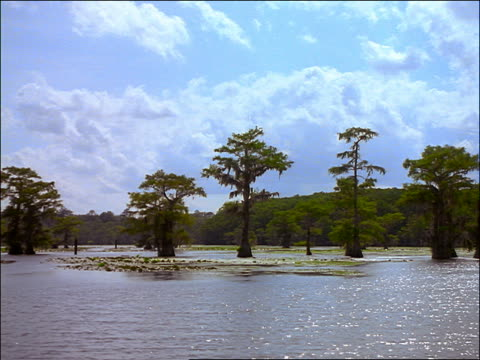 vidéos et rushes de wide shot boat point of view of swamp with cypress trees, puffy clouds in blue sky / caddo lake, texas - cinématographie