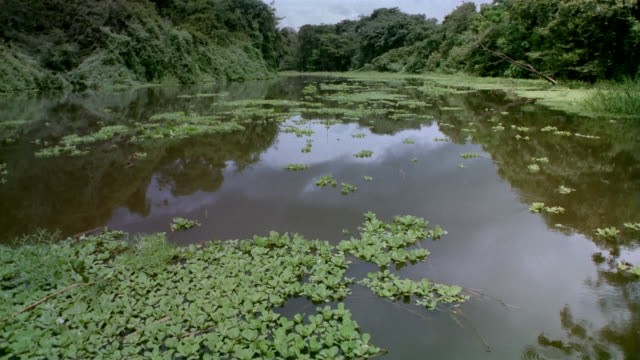 Wide shot boat point of view over river with floating aquatic plants / Venezuela