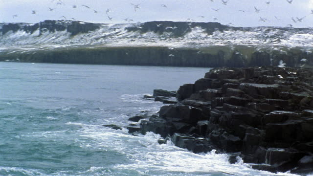 wide shot boat point of view tracking shot flock of gulls flying over rocky coastline / snow-covered cliffs in background / arctic - cliff stock videos & royalty-free footage