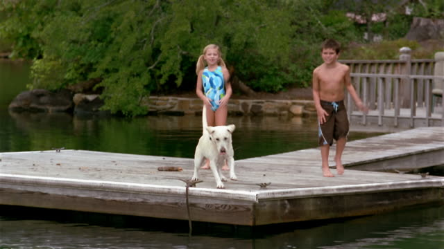 vídeos de stock, filmes e b-roll de wide shot boy and girl in bathing suits playing fetch with labrador retriever off dock - família do cão