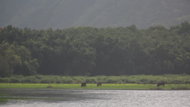 wide shot, cattle graze near lake - 自然美点の映像素材/bロール