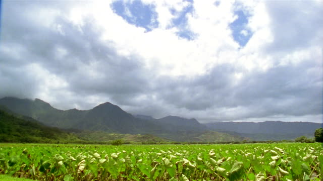 Wide shot cloudy sky over mountains and green field / Hawaii