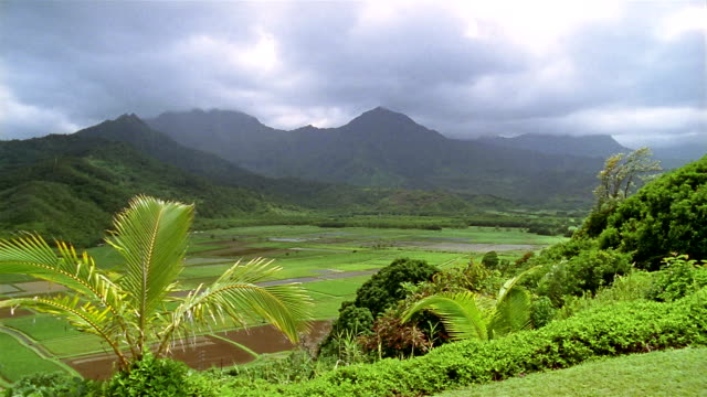wide shot cloudy sky over mountains and green hills + valley with plants in foreground / hawaii - kauai stock videos & royalty-free footage