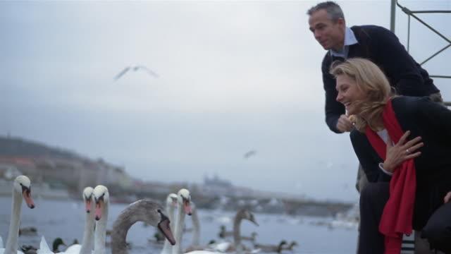 stockvideo's en b-roll-footage met wide shot couple feeding swans in river vltava at dusk / charles bridge and prague castle in background / prague - praagse burcht