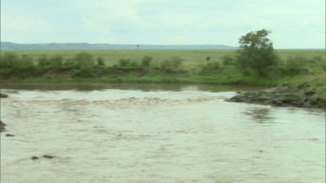 wide shot - crocodiles and hippos occupy opposite sides of a river in africa / kenya - medium group of animals stock videos & royalty-free footage