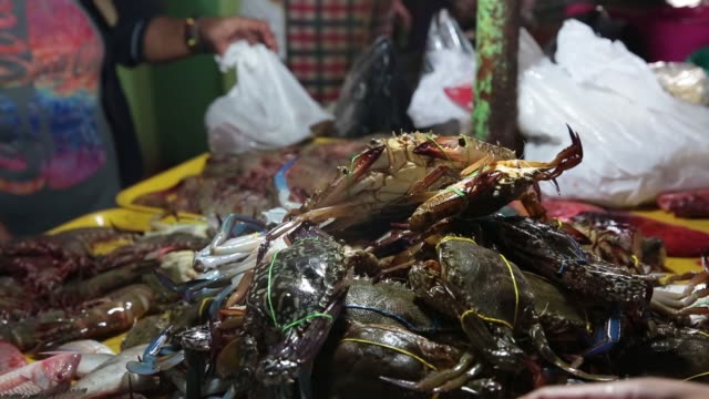 stockvideo's en b-roll-footage met wide shot customers select fresh seafood for sale at a stall in the old market in puerto princesa palawan medium shot a customer pays a vendor for... - steurgarnaal
