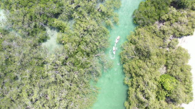 wide shot directly above couple stand up paddling through mangrove forest - using a paddle stock videos & royalty-free footage