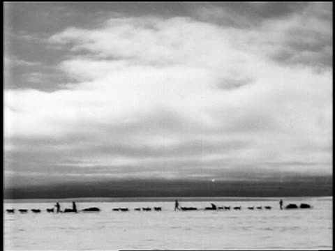 b/w 1929 wide shot pan dogsleds riding over ice in byrd's expedition to antarctica / documentary - 1928年点の映像素材/bロール