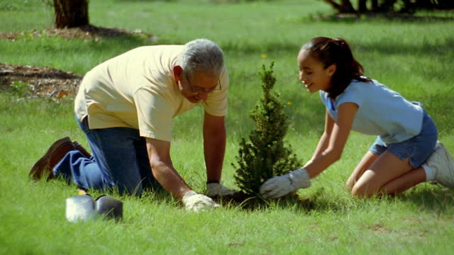 vidéos et rushes de wide shot dolly shot hispanic man and girl planting bush outdoors / new mexico - arbre