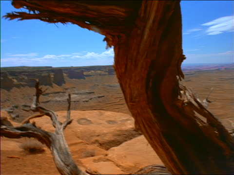 wide shot dolly shot over wide canyon with gnarled dead trees in foreground / time lapse clouds above / canyonlands, utah - ユタ州点の映像素材/bロール