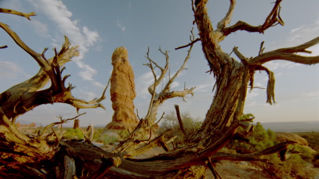 wide shot dolly shot rotting tree with weathered red rock formations in background + time lapse clouds above / arches natl. park, ut - arches national park stock videos & royalty-free footage