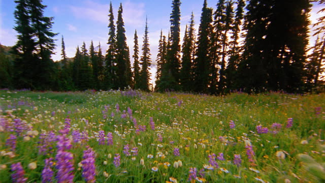 vidéos et rushes de wide shot dolly shot through meadow with wildflowers towards trees - travelling sur chariot