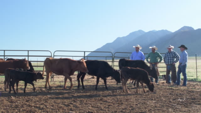 wide shot early morning ranchers at work - pen stock videos & royalty-free footage