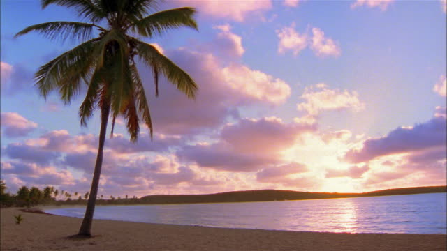 vidéos et rushes de wide shot early sunset on beach w/palm tree - palmier