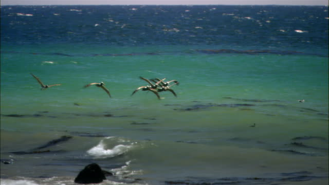 vídeos de stock, filmes e b-roll de wide shot field with ocean in background/ malibu, california - pacífico norte