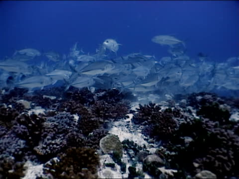 wide shot fish swimming above coral - invertebrate stock videos and b-roll footage