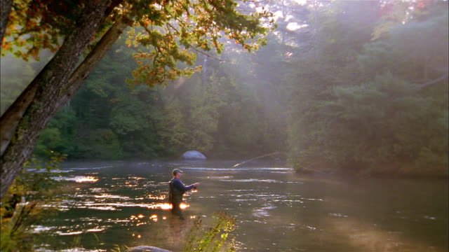 wide shot fisherman standing in tree-lined river fly fishing - maine stock videos & royalty-free footage