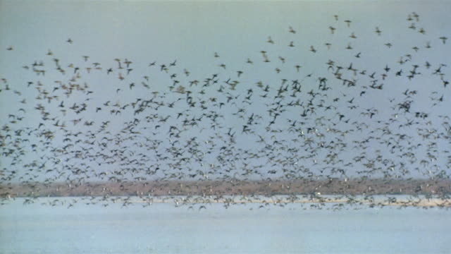 wide shot flock of birds talking off from water / spain - chaos stock videos & royalty-free footage