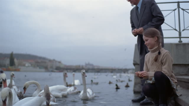 Wide shot girl and senior man feeding swans in River Vltava / Charles Bridge + Prague Castle in background / Prague