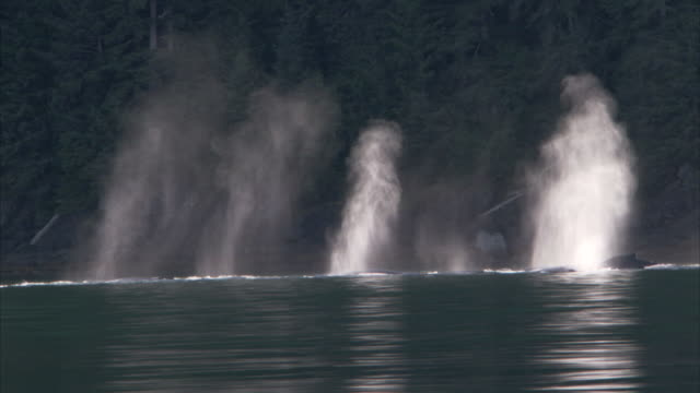 """wide shot hand-held-a pod of whales breaches and spouts simultaneously. / alaska, usa"" - cetaceo video stock e b–roll"