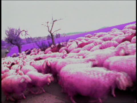 vídeos de stock e filmes b-roll de wide shot herd of sheep walking on country road / munich, germany - super exposto