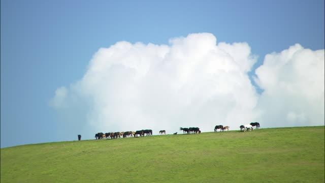 vídeos de stock, filmes e b-roll de wide shot horses grazing at top of hill under cloudy blue sky/ umbria - umbria