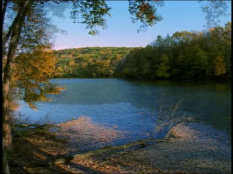 Wide shot lake surrounded by forest changing during summer, autumn, winter and spring