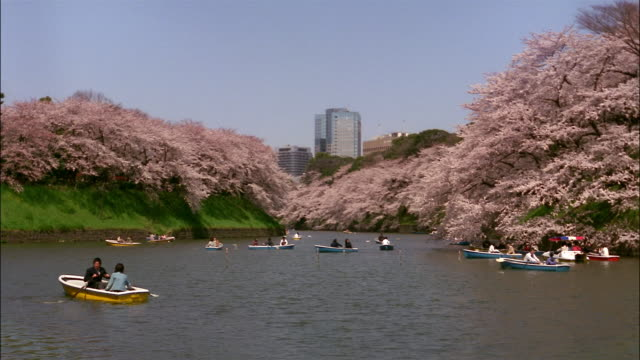 Wide shot lockdown people observiing cherry blossoms from rowboats in moat of Chidorigafuji/ Tokyo