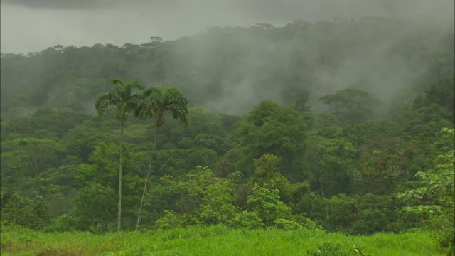 Wide shot, locked down; steam rising from rainforest