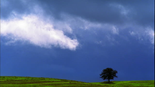 wide shot lone oak tree on hillside with clouds in sky / bradley, california - oak tree stock videos & royalty-free footage