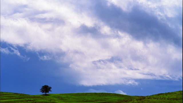 wide shot lone oak tree on hilltop with clouds in sky / bradley, california - oak tree stock videos & royalty-free footage