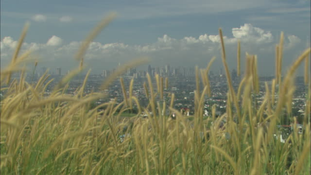 Wide Shot Long Shot Zoom In - Manilla skyline with tall grass waving in the wind, cumulus clouds in background / Manilla philippines