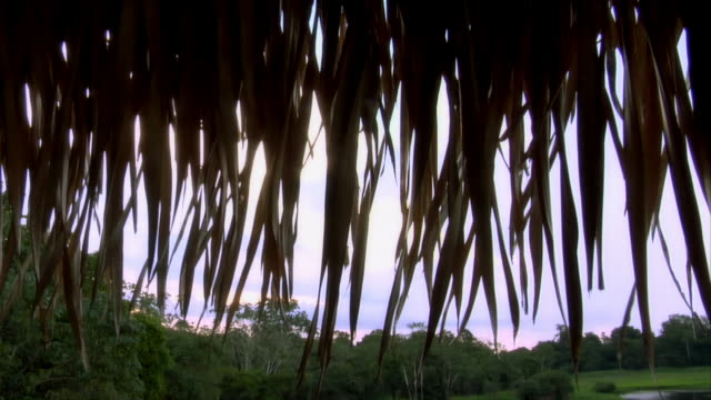 wide shot looking out toward rainforest through thatched roof overhang/ the amazon, brazil - strohdach stock-videos und b-roll-filmmaterial
